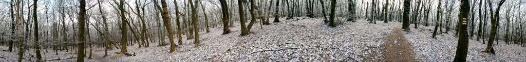 woodpanorama