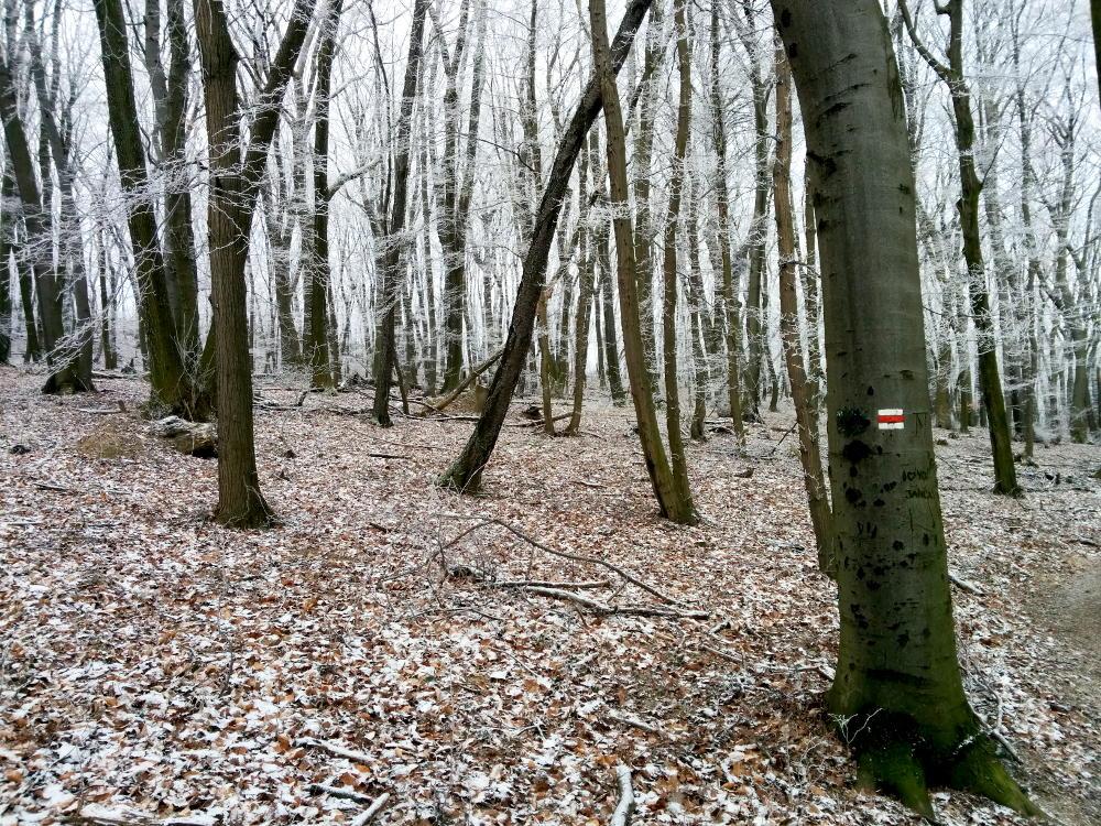 woodswithpathmarker
