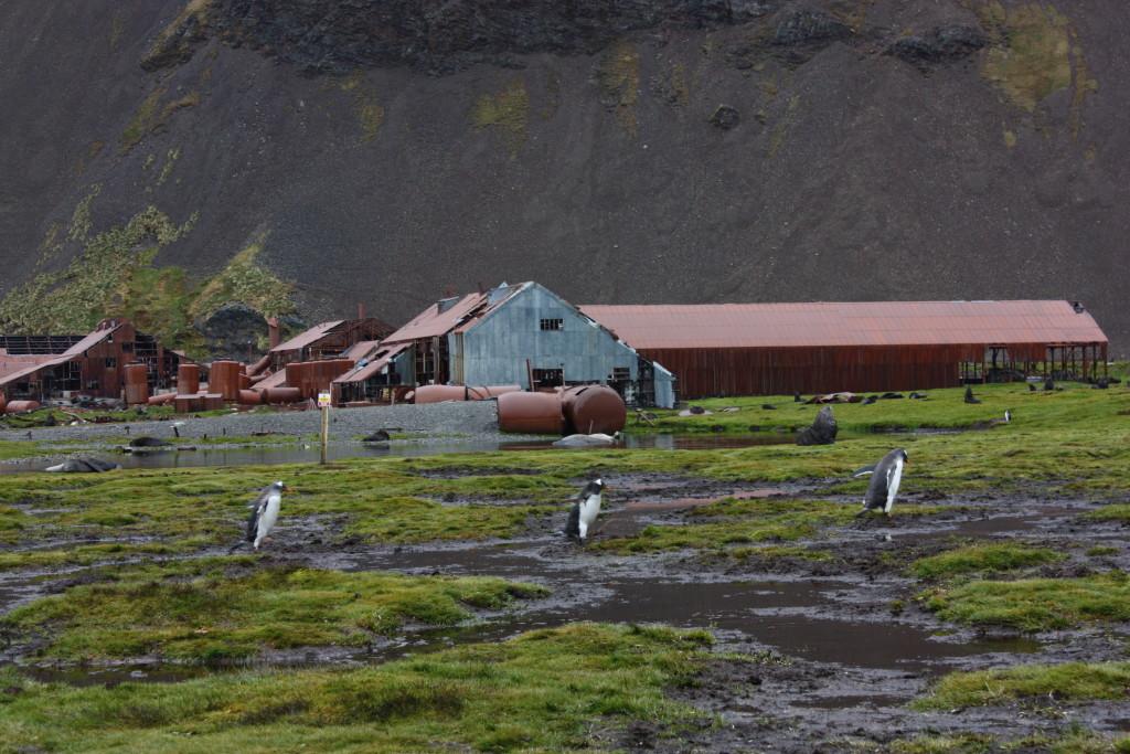 penguinline