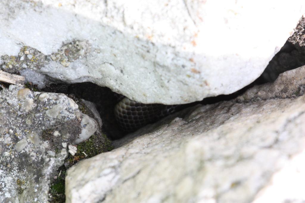 snakecrack
